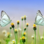 Classes online for mindfulness